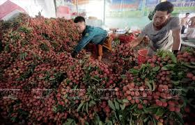 Exporting 1 billion ton of lychee to the US